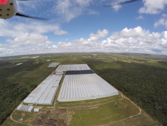 Rosas cearenses ganham mercado no Brasil