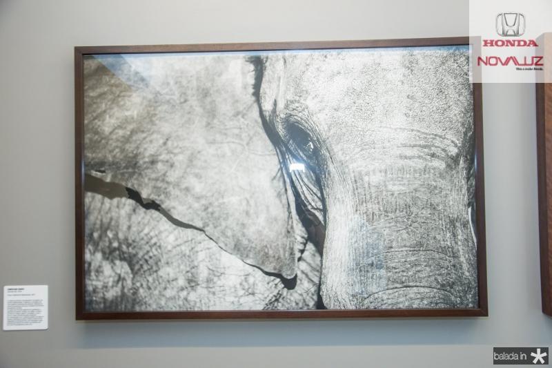 Exposição Luz e Sombra de Christian Cravo