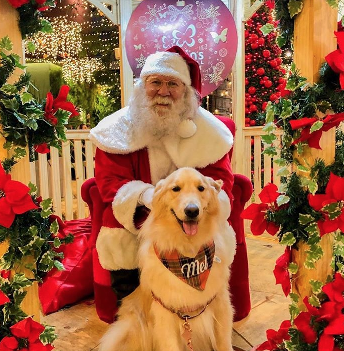 Dog Noel figura sessão de fotos com o público no Jardins Open Mall. Vem saber!