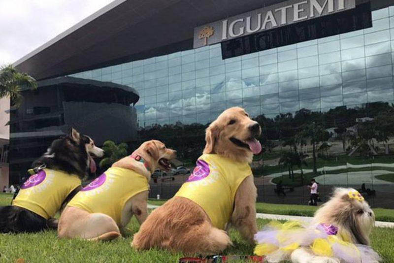 Shopping Iguatemi Fortaleza se firma como ótima opção de lazer para os Pets. Vem saber!