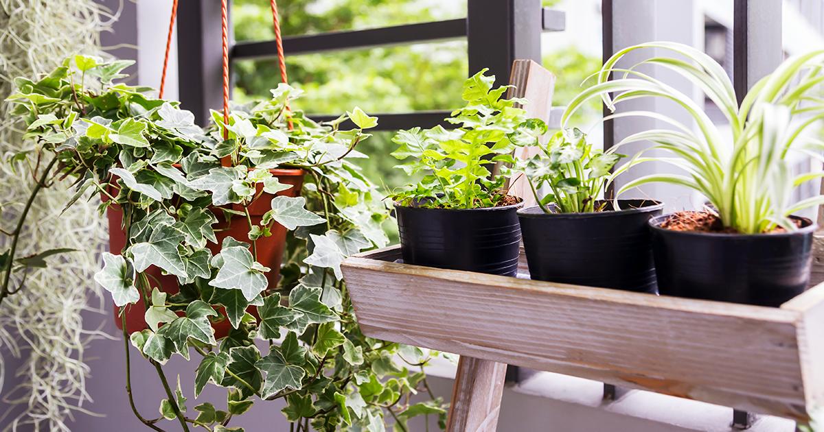 Confira uma seleção de dicas essenciais para começar um jardim no seu apartamento
