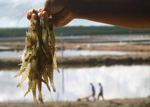 BNB amplia os limites de financiamento para fortalecer a agricultura familiar
