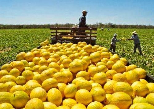Receita abre prazo para entrega da declaração do Imposto Territorial Rural