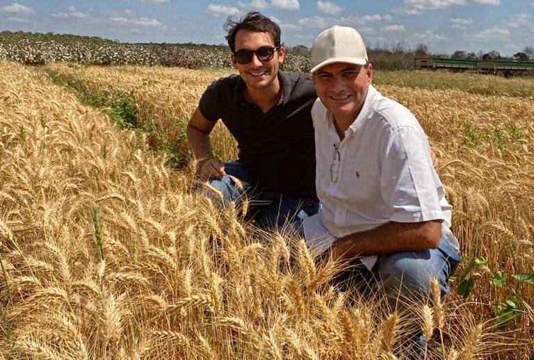Empresários querem ampliar fabricação de cerveja artesanal com trigo cearense