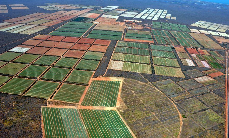 Agrícola Famosa fecha parceria com a Citri&Co para serem referência global