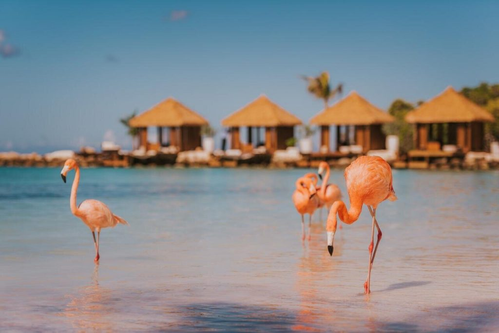 Flamingo Beach Aruba Leroy Viagens